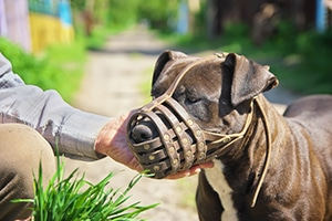 man petting muzzled dog