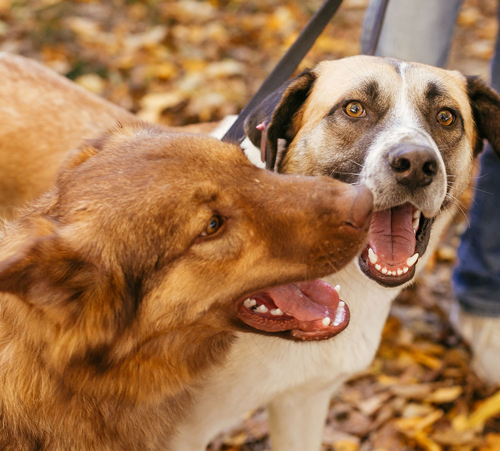 Two cute friends dogs playing together